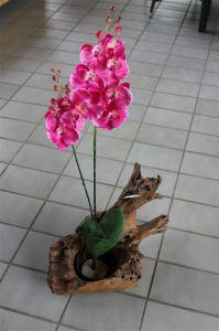 Planter_Teakwurzel